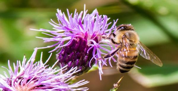 Ogled dobrih praks, sirarstva in čebelarjenja v gorski vasici Čadrg nad Tolminom